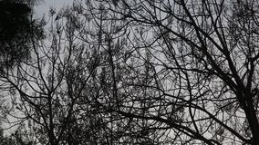 Tree branches silhouette. In Istanbul, Turkey stock video