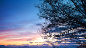 Tree branches silhouette over colorful cloudy sky Royalty Free Stock Photo