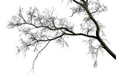 Tree branches silhouette  over white background Royalty Free Stock Photos