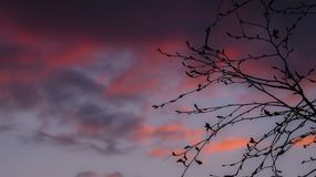 Purple Sunset Sky and Tree Silhouette Royalty Free Stock Photography