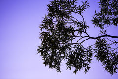Tree and branches silhouette Stock Images