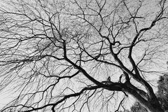 Tree branches stock photography