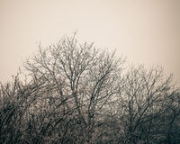 Tree branches silhouettes. Royalty Free Stock Images