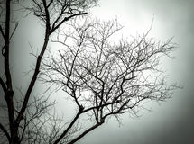 Tree branches silhouettes. Royalty Free Stock Image