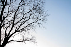 Tree branches. Silhouettes of tree branches.Concept of arid stock photo