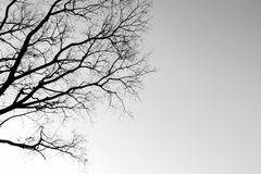 Tree branches. Silhouettes of tree branches.Concept of arid stock photography