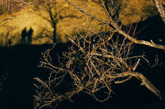 Tree branches with silhouettes of people Royalty Free Stock Images