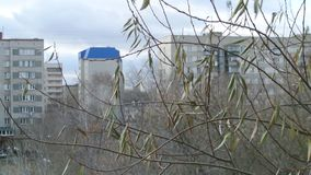 Tree branches on sity background. The concept of gray days. Autumn tree sways in the wind. Conventional high-rise buildings stock video