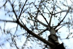 Tree branches and sky circling. Tree branches, kregoy movement, merry-go-round, sky blurred, circling, bare tree branches, beautiful symmetrical branches stock photos
