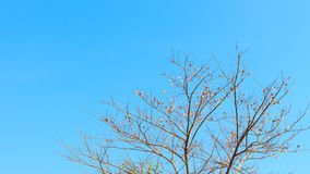 Tree branches on the sky Stock Photos