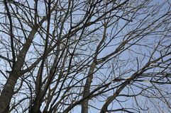 Tree branches in the sky from Sinaia resort in Romania Stock Photos