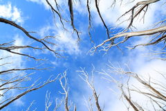 Tree branches with snow against blue sky Stock Photos
