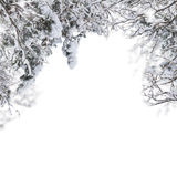 Tree branches with snow Royalty Free Stock Images