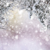 Tree branches with snow Stock Photos