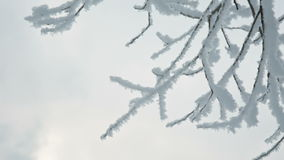 Tree branches in the snow. Photo of snow covered branches of plants and trees in winter stock footage