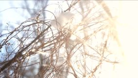 Tree branches, snow and sunlight. Tree branches snow and sunlight. Winter morning, bright sun stock footage