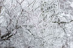 Tree branches in the snow. Tree branches in the snow at witner time royalty free stock photography