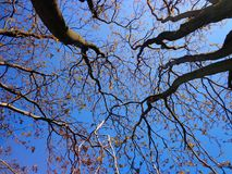 Tree, Branches, Spring, Nature, Sky Stock Photos