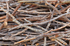 Tree branches stacked. Nature background in warm tone Stock Photos