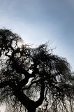 The tree branches Royalty Free Stock Photos