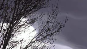 Tree branches with sun peeking through silhouette tree. Dark storm clouds with sun peeking through silhouette tree blowing in the wind stock footage