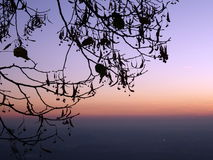 Tree branches, sunset and the horizon far away. Tree branches close up in norhern Italy Royalty Free Stock Image
