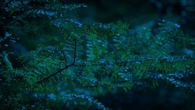 Forest Tree Branches At Dusk. Tree branches swaying in the evening stock video footage