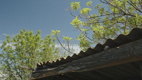 Tree branches swaying in the wind. Above the roof of the wooden shed on the background of blue sky stock video