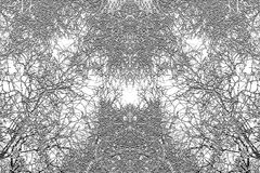 Tree branches texture Royalty Free Stock Photography