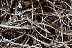 Tree branches Texture Royalty Free Stock Photo