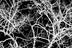 Tree branches and twigs of white color on black background. Stock Photo