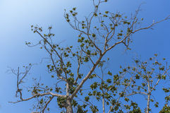 Tree branches. Under the blue skies Stock Photography