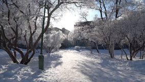 Tree branches under the cap of snow in the city park.  stock video footage