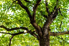 Tree branches under the forest canopy stock images