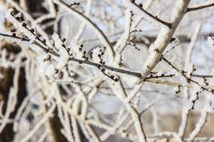 Tree branches under snow Stock Photography