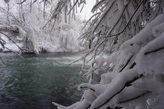 Winter, snow, river, trees royalty free stock photos