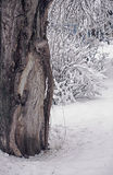 Tree branches under snow in winter. Day in the forest stock photography