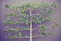 Tree branches Stock Photo