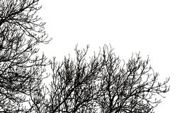 Tree branches on white Royalty Free Stock Images