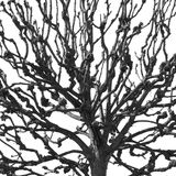 Tree branches. On white background Royalty Free Stock Images