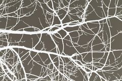 Tree branches white on gray background graphically without leaves royalty free stock image