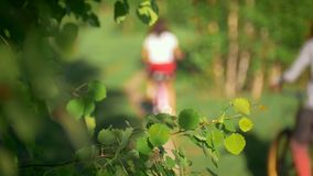 Tree branches in the wind, background of young girls riding bicycles, blurred, green forest, summer day. Slow-motion stock video footage