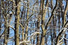 Tree branches in winter. A closeup of tree branches in winter, devoid of leaves but covered in snow stock images