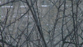 Tree branches in winter. Close-up aspen tree branches in winter stock video footage
