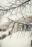 Tree branches in winter russian forest at sun day with snow stock photo