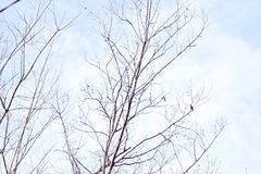Tree Branches Winter Small Birds on Pastel Blue Sky. Outdoor Fresh Stock Images