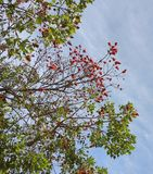 Tree branching. Blue sky with a tree branching out with flowers Royalty Free Stock Photos