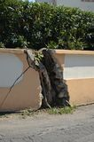 Power of nature. A tree break up a wall in Moraitika Corfu island, Greece - Europe Royalty Free Stock Photography