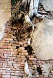Tree breaks grunge wall. Tree root breaks grunge wall Stock Photos