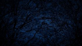 Tree In Breeze At Night. Leaves rustling on tree branches in the dark stock video